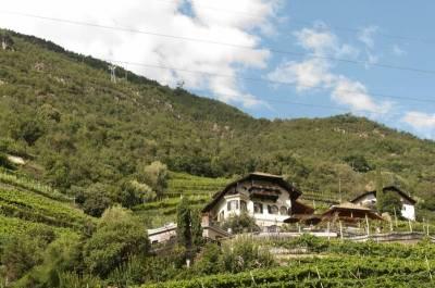 Das kleine Weinbaugebiet Untermagdalena bei Bozen