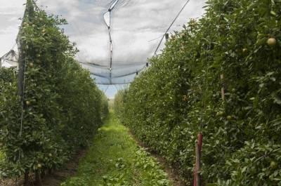 Neben dem Weinbau prägen Apfelgärten das Landschaftsbild