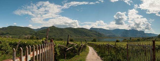 Der Kalterersee ist ein beliebter Badesee, aber auch für seine Weine weithin bekannt