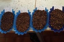 Wie wird man Kaffee-Experte? Kaffee Institut