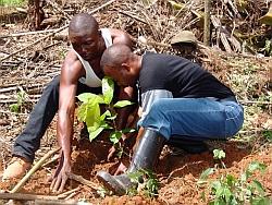 Baumpflanzung in Virunga