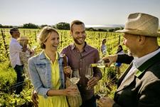Weinreise Neusiedlersee 2